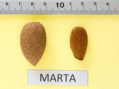 2ª Marta cascara y pepita