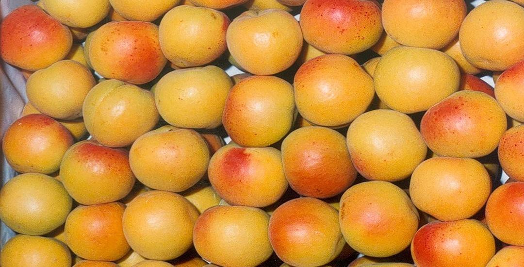 Fruta de Dorada