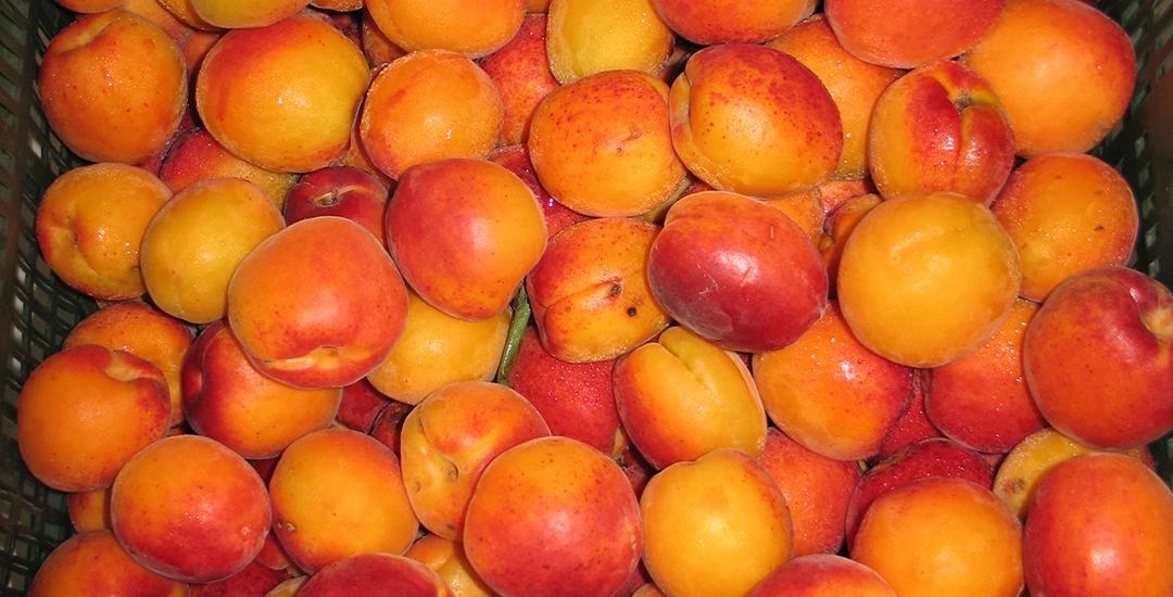 Fruta de Micaelo en caja