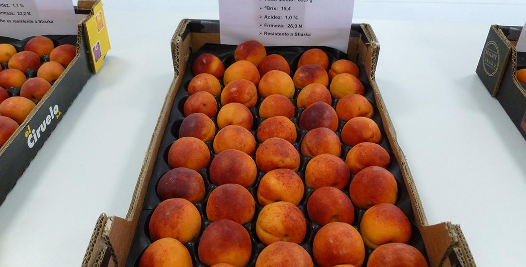 Fruta de Micaelo en plato