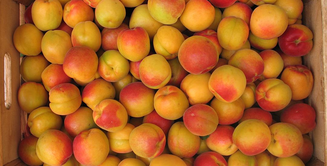 Fruta de Rojo Pasión