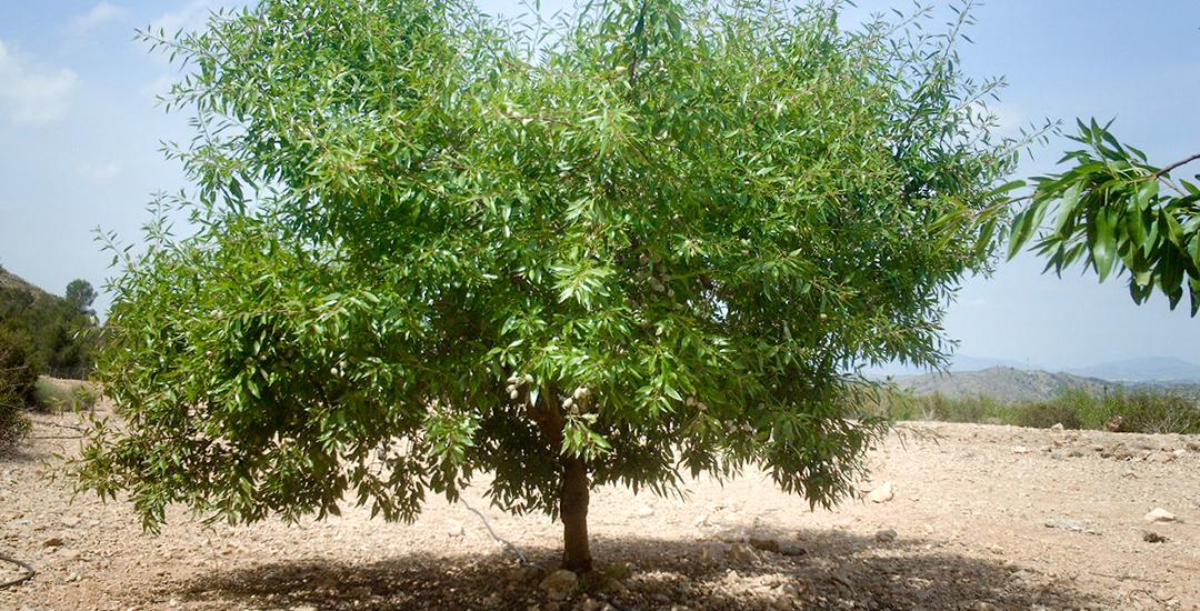 Tardona arbol web