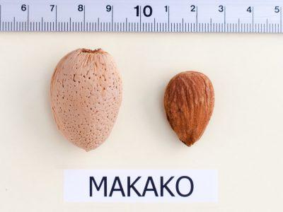 Makako Unitaria
