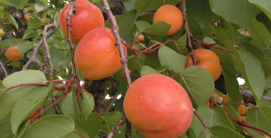 Deseo - Fruto