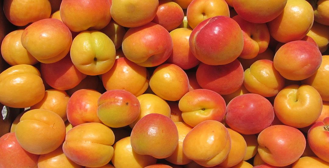 Fruta de Mirlo Anaranjado