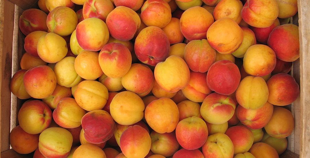 Fruta de Mirlo Rojo en caja
