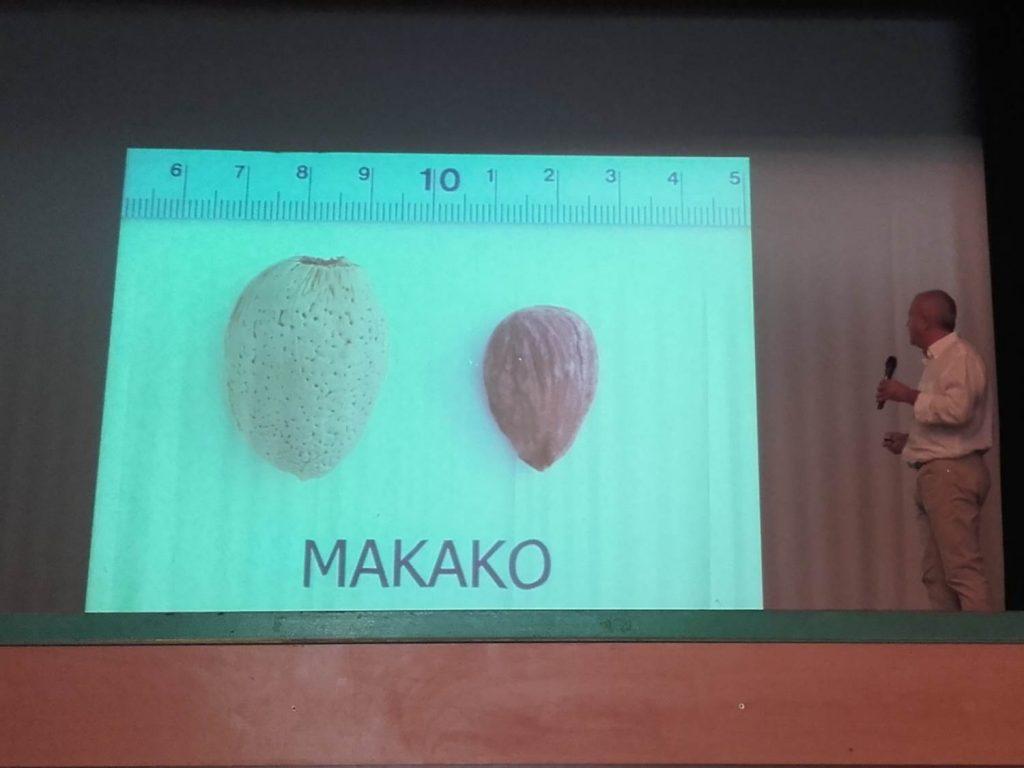Federico Dicenta Makako Penta almond almendro